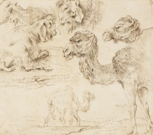 Giovanni Benedetto Castiglione, Studies of dromedaries and goats,c 1630. Royal Collection Trust / (C) Her Majesty Queen Elizabeth II 2013