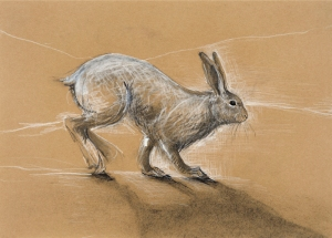 Arctic Hare Charcoal & Chinagraph 33.5 x 48.75 cm