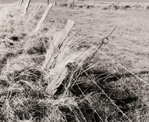 Peter Cattrell, Wire Picket in Farm Fence, Frezenburg, Ypres, Belgium, 1997 © Peter Cattrell