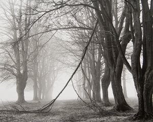 Peter Cattrell, Avenue of Trees, Newfoundland Park, Somme, France, 2000 © Peter Cattrell