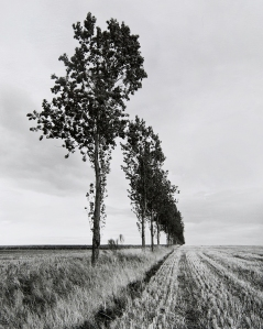 Peter Cattrell, Line of Trees Winter, Thiepval, Somme, France, 2000 © Peter Cattrell
