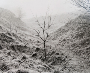 Peter Cattrell, Lone Tree, Y Ravine, Beaumont-Hamel, Somme, France, 2000 © Peter Cattrell
