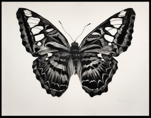 Butterfly I , 94cm x 121cm, Charcoal on paper