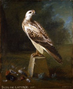 "Nicolas Spheyman (before 1751) A Rough-Legged Buzzard Oil on Canvas Signed, Inscribed and Dated: ""BUZE . DE. LAPONIE. 1735. Spayeman . 1735"" 28 9/16 x 23 1/4 inches, 72.5 x 59 cm Provenance: Private Collection, France Rafael Valls"
