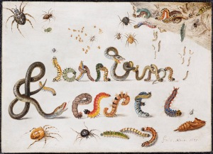 Jan van Kessel, Snakes, Spiders and Caterpillars contorted to spell the Artist's Name, 1657, Copper, 15x20cm. Courtesy of Johnny van Haeften.