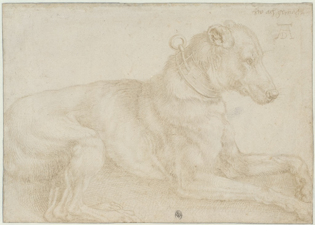 Albrecht Dürer, Dog resting, c. 1520, silverpoint over charcoal? on pale pink prepared paper, 128 x 180mm. © The Trustees of the British Museum