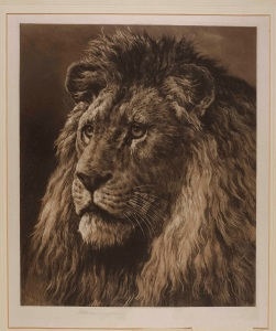 His Majesty (Head of a Lion) Signed in pencil by the artist Published in April 1888 by C.E. Clifford & Co., London 23½ x 18½ in / 59.5 x 47 cm Exhibited: RA 1888, No. 1595