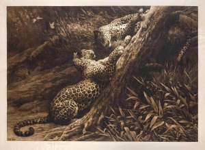 Play (Two Leopards at play) Signed in pencil by the artist Published in May 1907 by Frost & Reed Ltd, 19¾ x 26½ in / 50 x 67.5 cm Exhibited: R.A. 1907, No. 1379