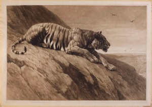 The Watcher on the Hill (Recumbent Tiger) Signed in pencil by the artist Published in January 1900 by Frost & Reed, Ltd, 18¼ x 27 in / 46.5 x 68.5 cm Exhibited: R.A. 1900, No.1564