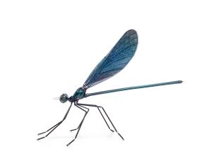 Dragonfly. Libellule. Unique 80cm H x 54cm W x 115cm L