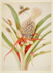 Pineapple with cockroaches, 1702-03 Royal Collection Trust / (C) Her Majesty Queen Elizabeth II 2016.
