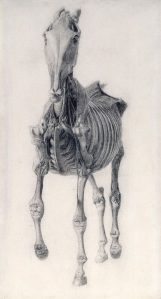 Work on paper 'Finished study for 'Anatomy of the Horse: 10th anatomical table' George Stubbs 1756-58 Pencil on laid paper 35.5 x 19.5 cm © Royal Academy of Arts, London
