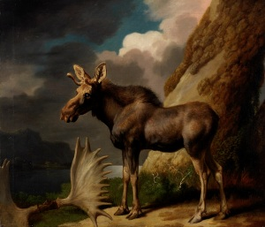 George Stubbs The Moose 1770 Oil on canvas 61 x 70.5 cm © The Hunterian, University of Glasgow, 2016